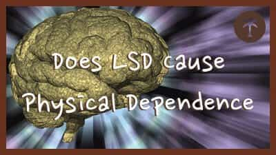 LSD Physical Dependence and Addiction